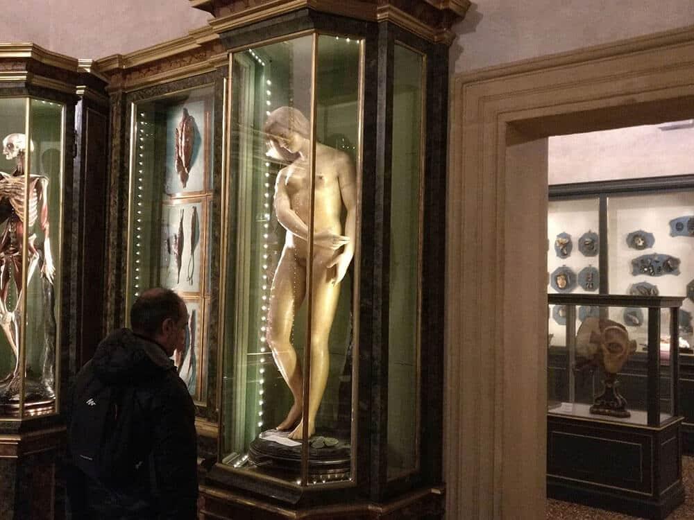 Palazzo Poggi Anatomical Wax
