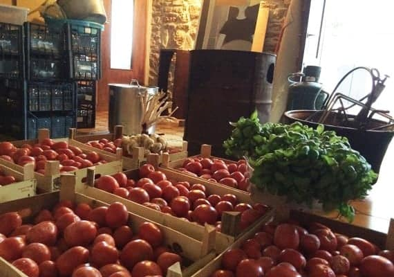 How to make tomato sauce: the summer Casa Chiesi's nightmare