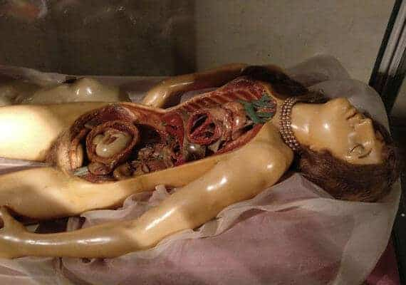 The 18th-century anatomical wax creators: the thin boundary between science and art