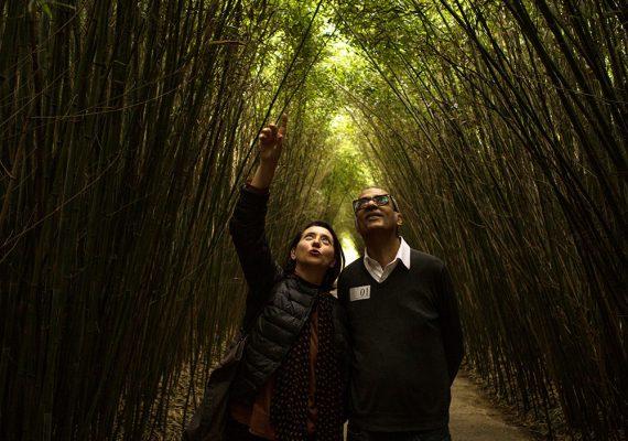 Labirinto della Masone in Fontanellato : Worlds Largest Labyrinth